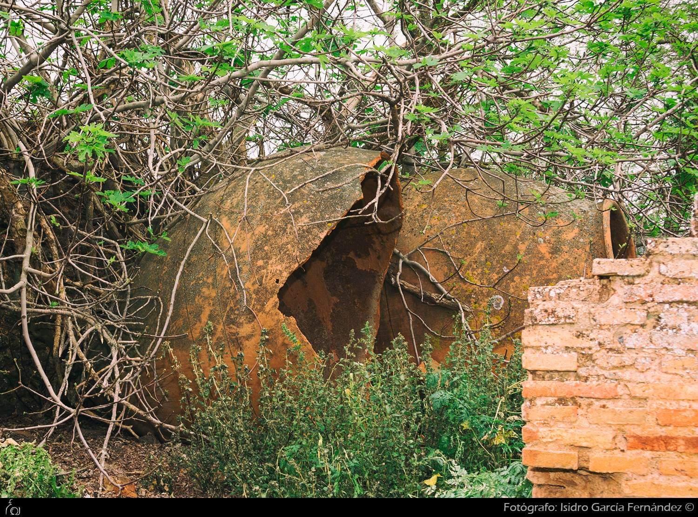 Tinaja en la bodega de Ceriola, en la finca de la Encomienda de Sacristanía. Foto de Isidro García Fernández